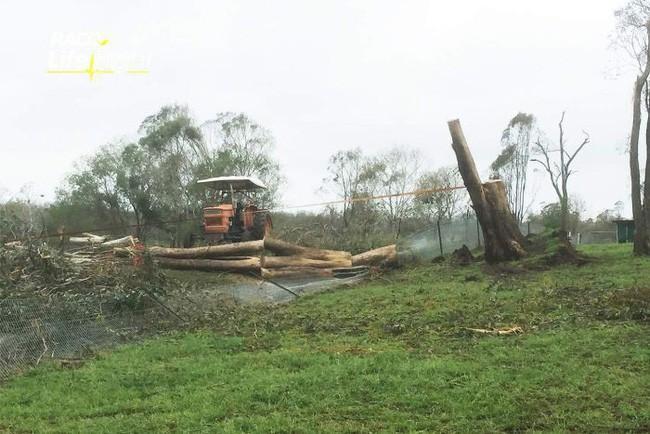 Chuyện kinh dị có thật: Cậu bé hí hửng chụp ảnh gần gốc cây cổ thụ đã đổ, cây bất thình lình bật dậy nuốt chửng - Ảnh 3.