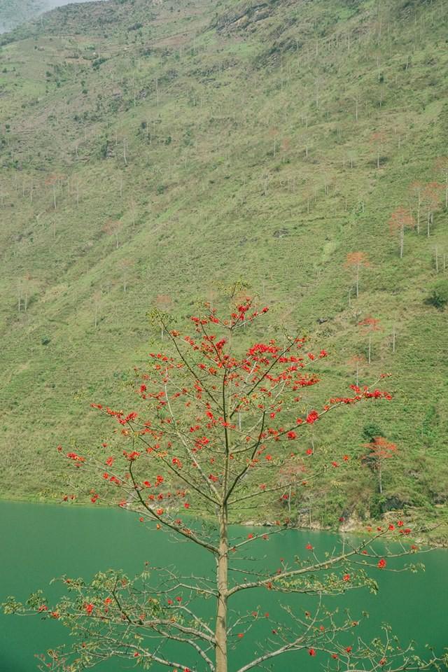 Bí kíp săn hoa ở Hà Giang chỉ mất 2 ngày và 1,5 triệu đồng: Đảm bảo vẫn vui hết nấc và đi được đủ nơi! - Ảnh 4.