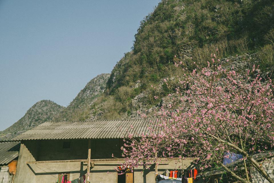 Bí kíp săn hoa ở Hà Giang chỉ mất 2 ngày và 1,5 triệu đồng: Đảm bảo vẫn vui hết nấc và đi được đủ nơi! - Ảnh 5.