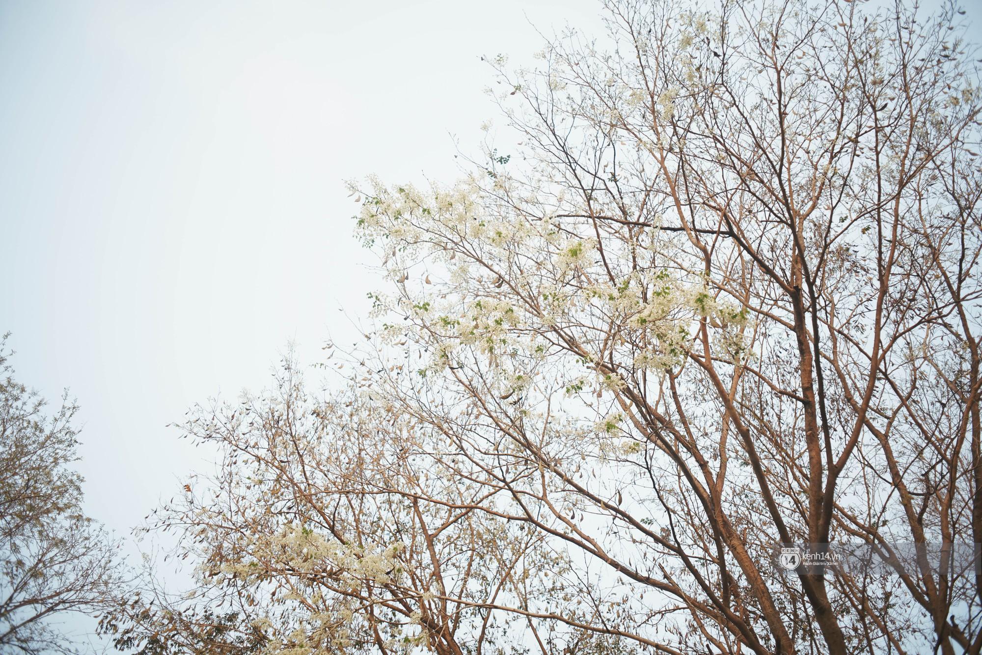 Đây là Hà Nội, của những ngày hoa sưa tinh khôi phủ trắng trời như tuyết - Ảnh 9.