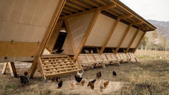 Chiêm ngưỡng chiếc chuồng gà giá 20.000 USD, được thiết kế bởi công ty kiến trúc danh tiếng - Ảnh 1.