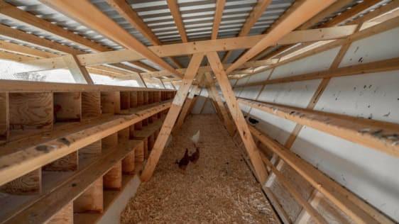 Chiêm ngưỡng chiếc chuồng gà giá 20.000 USD, được thiết kế bởi công ty kiến trúc danh tiếng - Ảnh 6.