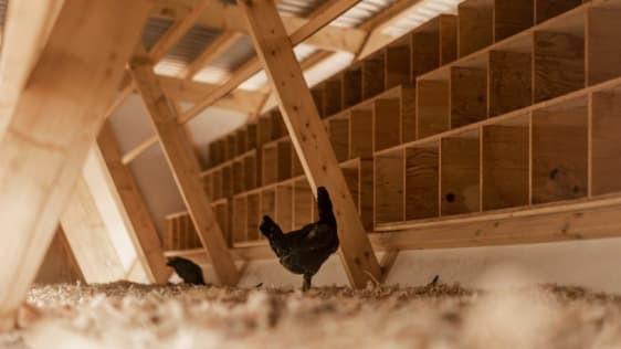 Chiêm ngưỡng chiếc chuồng gà giá 20.000 USD, được thiết kế bởi công ty kiến trúc danh tiếng - Ảnh 7.