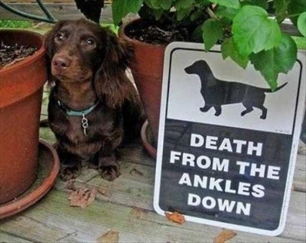 Chùm ảnh về những con boss ngáo ngơ phủi bỏ mọi ý nghĩa của tấm bảng coi chừng chó dữ - Ảnh 8.