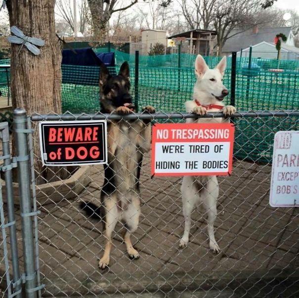 Chùm ảnh về những con boss ngáo ngơ phủi bỏ mọi ý nghĩa của tấm bảng coi chừng chó dữ - Ảnh 15.