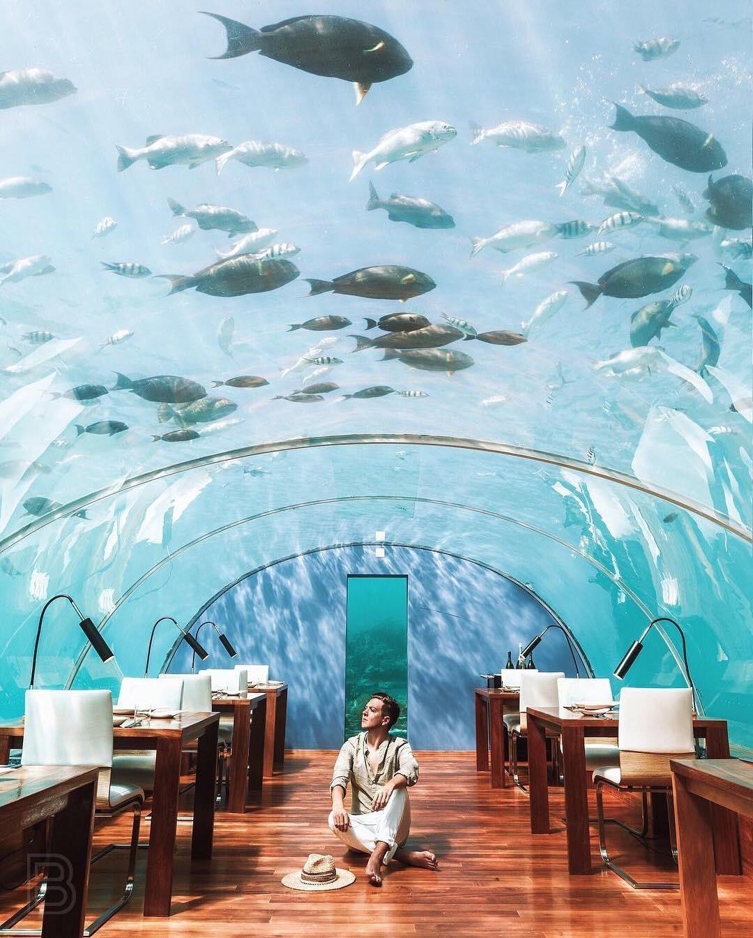 Loá mắt với khách sạn triệu đô dưới đáy biển Ấn Độ Dương mà chỉ giới siêu giàu mới đủ tiền thuê - Ảnh 8.