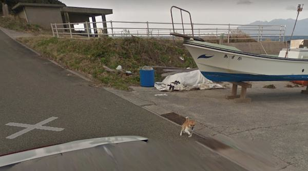Chú chó Nhật hủy hoại mọi khung hình của Google Street View vì đuổi theo camera - Ảnh 4.