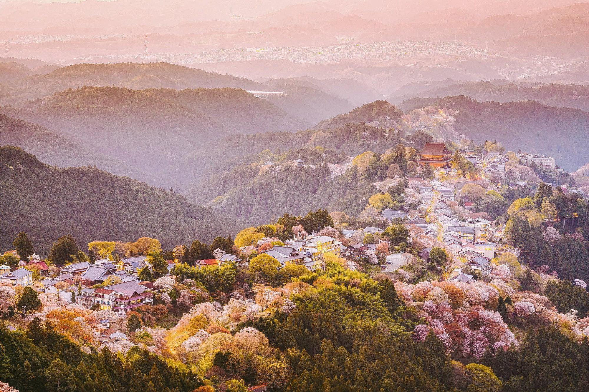 Quên Tokyo hay Kyoto đi, đây mới là nơi có nhiều hoa anh đào nhất Nhật Bản này! - Ảnh 1.