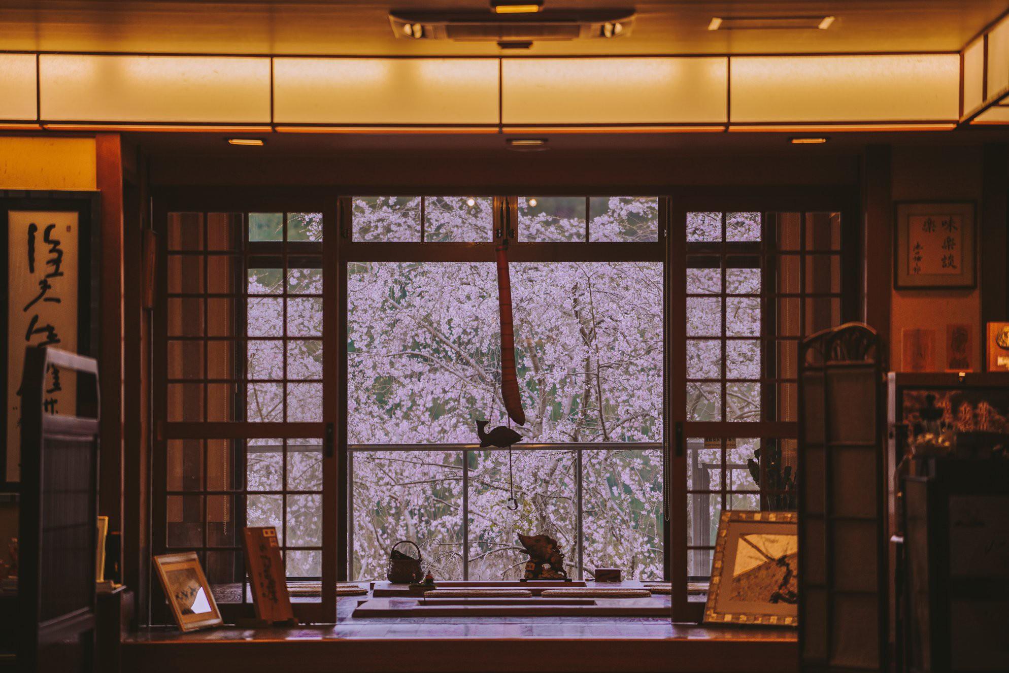 Quên Tokyo hay Kyoto đi, đây mới là nơi có nhiều hoa anh đào nhất Nhật Bản này! - Ảnh 6.
