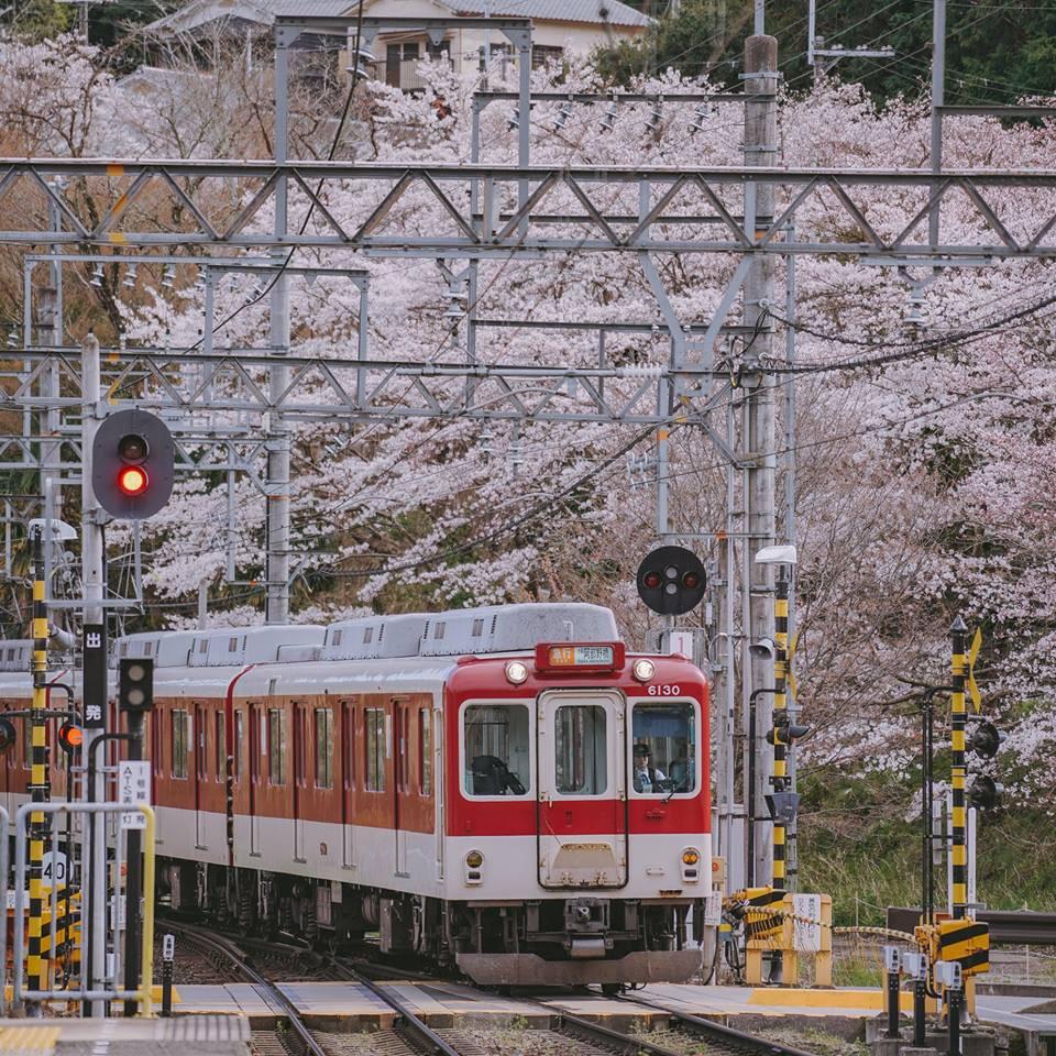 Quên Tokyo hay Kyoto đi, đây mới là nơi có nhiều hoa anh đào nhất Nhật Bản này! - Ảnh 7.