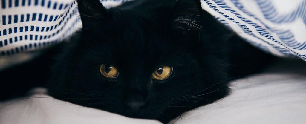 Khoa học xác nhận: Lũ mèo thực sự biết tên của chúng nó, chẳng qua là giả điếc thôi - Ảnh 1.