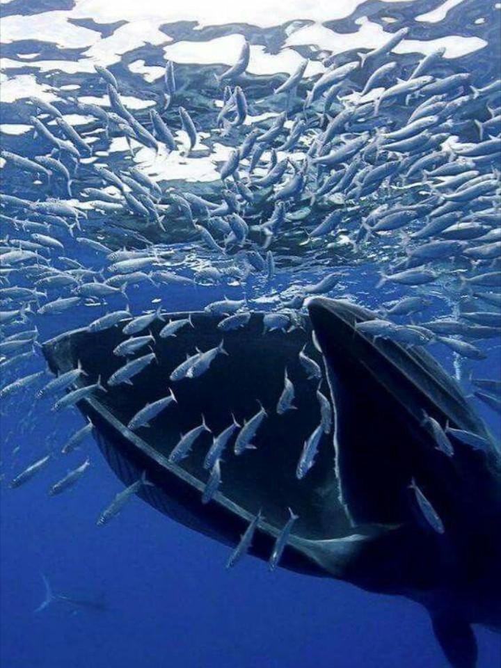 Rùa biển thở bằng phổi, vậy chúng làm thế nào để ăn được dưới nước? Đáp án là sự kỳ diệu của tạo hóa - Ảnh 1.