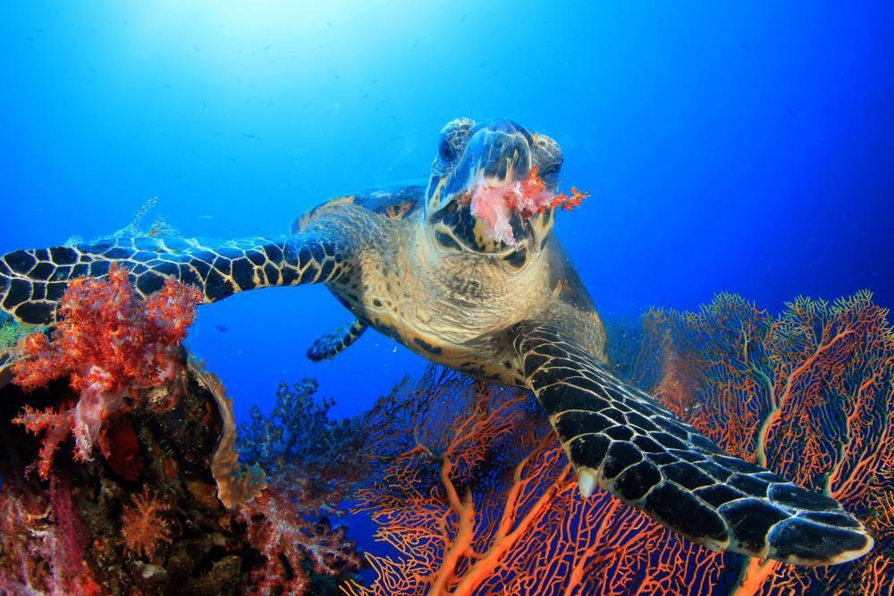 Rùa biển thở bằng phổi, vậy chúng làm thế nào để ăn được dưới nước? Đáp án là sự kỳ diệu của tạo hóa - Ảnh 2.