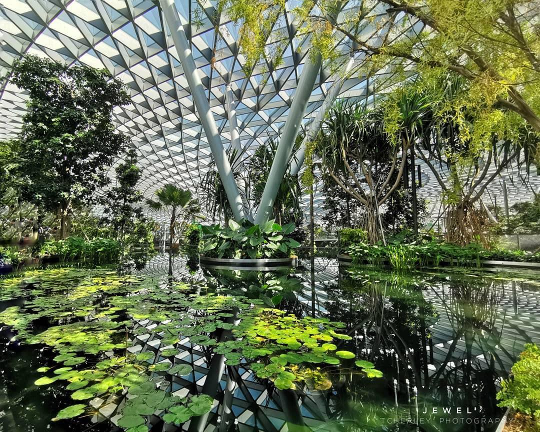Vừa mới khai trương, khu phức hợp Jewel tại sân bay Changi - Singapore đã chiếm trọn spotlight trên MXH - Ảnh 14.