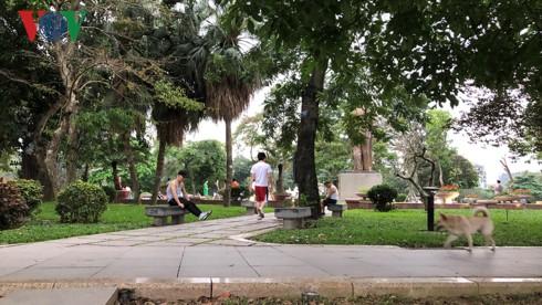 Kinh hãi chó không rọ mõm chạy rông trong công viên Thống Nhất - Ảnh 2.