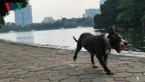 Kinh hãi chó không rọ mõm chạy rông trong công viên Thống Nhất - Ảnh 12.