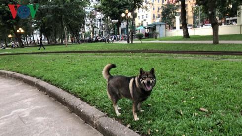 Kinh hãi chó không rọ mõm chạy rông trong công viên Thống Nhất - Ảnh 18.