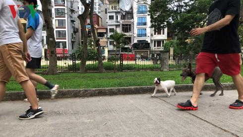 Kinh hãi chó không rọ mõm chạy rông trong công viên Thống Nhất - Ảnh 20.