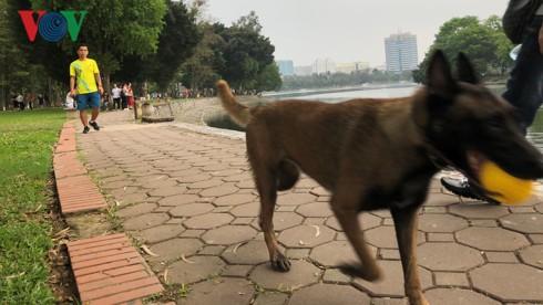 Kinh hãi chó không rọ mõm chạy rông trong công viên Thống Nhất - Ảnh 3.