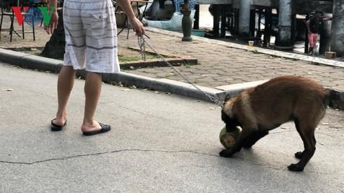Kinh hãi chó không rọ mõm chạy rông trong công viên Thống Nhất - Ảnh 4.