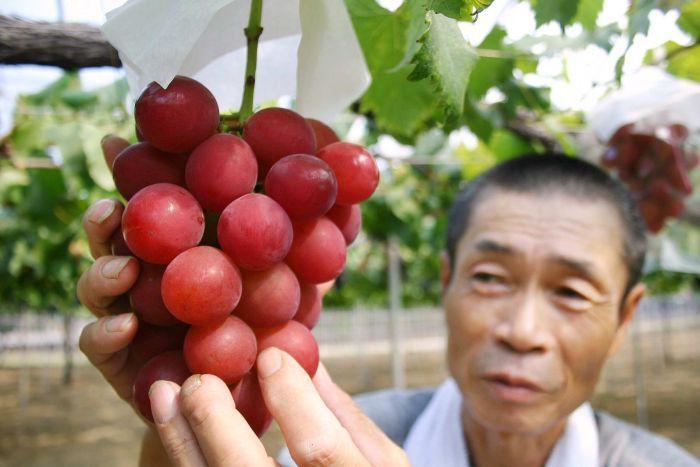Nhật Bản có những loại trái cây thoạt nhìn thì cũng thường nhưng có giá cao bất ngờ - Ảnh 6.