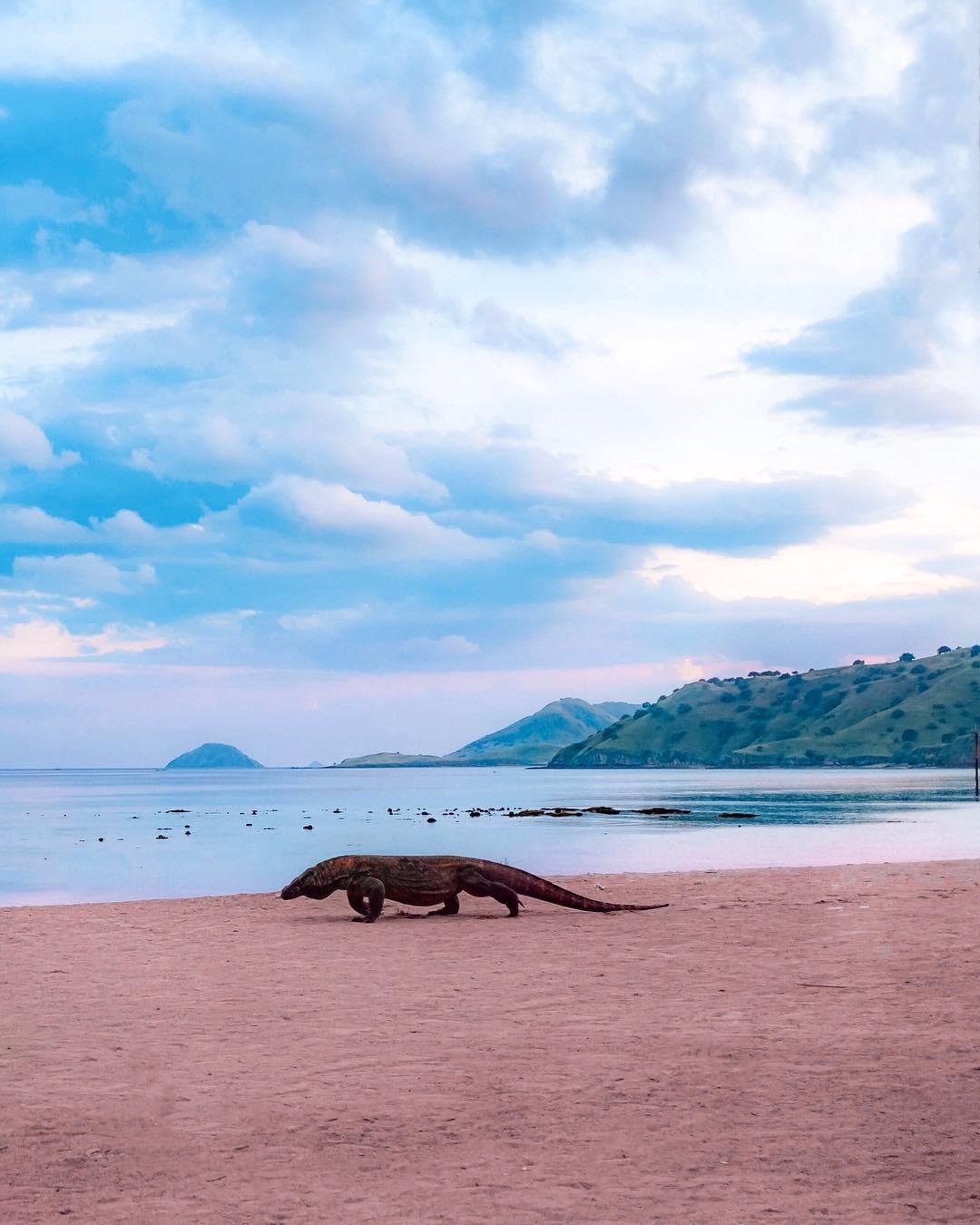 Đảo rồng Komodo tại Indonesia sẽ đóng cửa vào năm 2020, đi ngay trước khi quá muộn nào! - Ảnh 1.