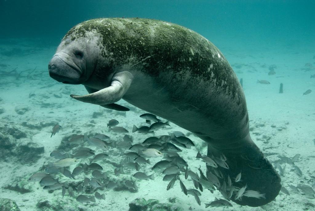 5 câu chuyện chứng minh hậu môn có thể là thứ kỳ quặc nhất thế giới động vật - Ảnh 2.