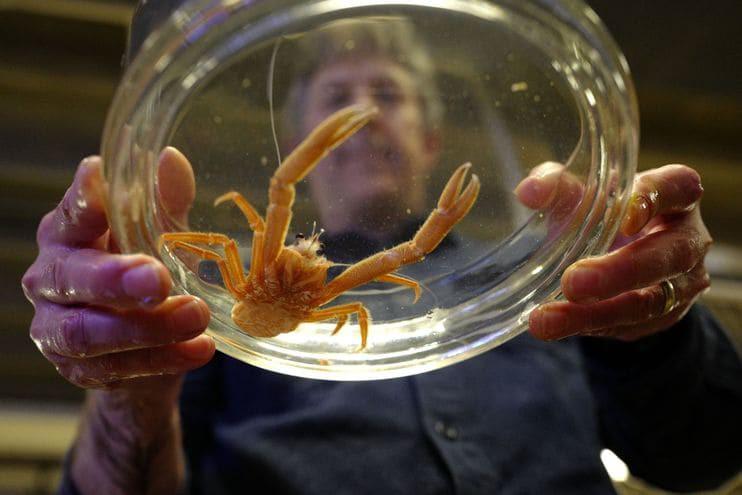 Ngày càng nhiều sinh vật lạ dạt bờ - xu hướng này nguy hiểm hơn bạn tưởng - Ảnh 3.