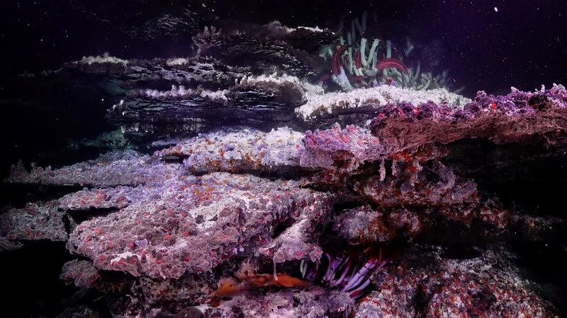 Tháp hồng soi bóng hồ gương dưới đáy biển: Kỳ quan tuyệt đẹp mới được tìm ra tại California - Ảnh 4.