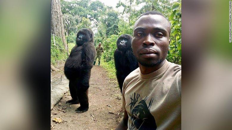 Ham chụp tự sướng với các chú kiểm lâm, 2 con khỉ đột bỗng chốc nổi như cồn khắp thế giới - Ảnh 1.