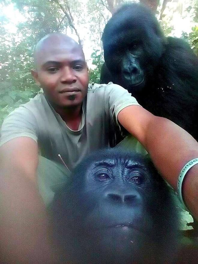 Ham chụp tự sướng với các chú kiểm lâm, 2 con khỉ đột bỗng chốc nổi như cồn khắp thế giới - Ảnh 5.