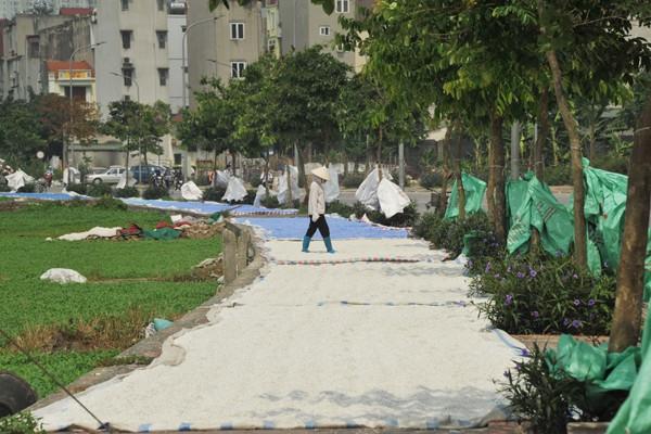 Nhiều mối nguy khó lường từ những kho tập kết phế thải nhựa khổng lồ ở làng Triều Khúc - Ảnh 7.
