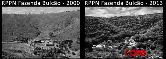 Vợ chồng nhiếp ảnh gia Brazil trồng 2 triệu cây xanh trong 20 năm để hồi sinh khu rừng bị tàn phá, hàng trăm loài động vật lũ lượt kéo về - Ảnh 2.