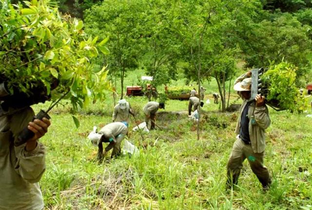 Vợ chồng nhiếp ảnh gia Brazil trồng 2 triệu cây xanh trong 20 năm để hồi sinh khu rừng bị tàn phá, hàng trăm loài động vật lũ lượt kéo về - Ảnh 3.