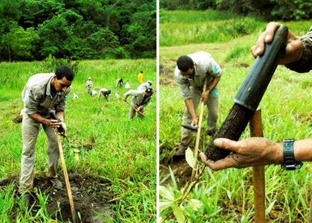 Vợ chồng nhiếp ảnh gia Brazil trồng 2 triệu cây xanh trong 20 năm để hồi sinh khu rừng bị tàn phá, hàng trăm loài động vật lũ lượt kéo về - Ảnh 4.