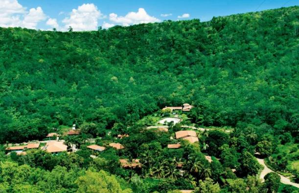 Vợ chồng nhiếp ảnh gia Brazil trồng 2 triệu cây xanh trong 20 năm để hồi sinh khu rừng bị tàn phá, hàng trăm loài động vật lũ lượt kéo về - Ảnh 8.