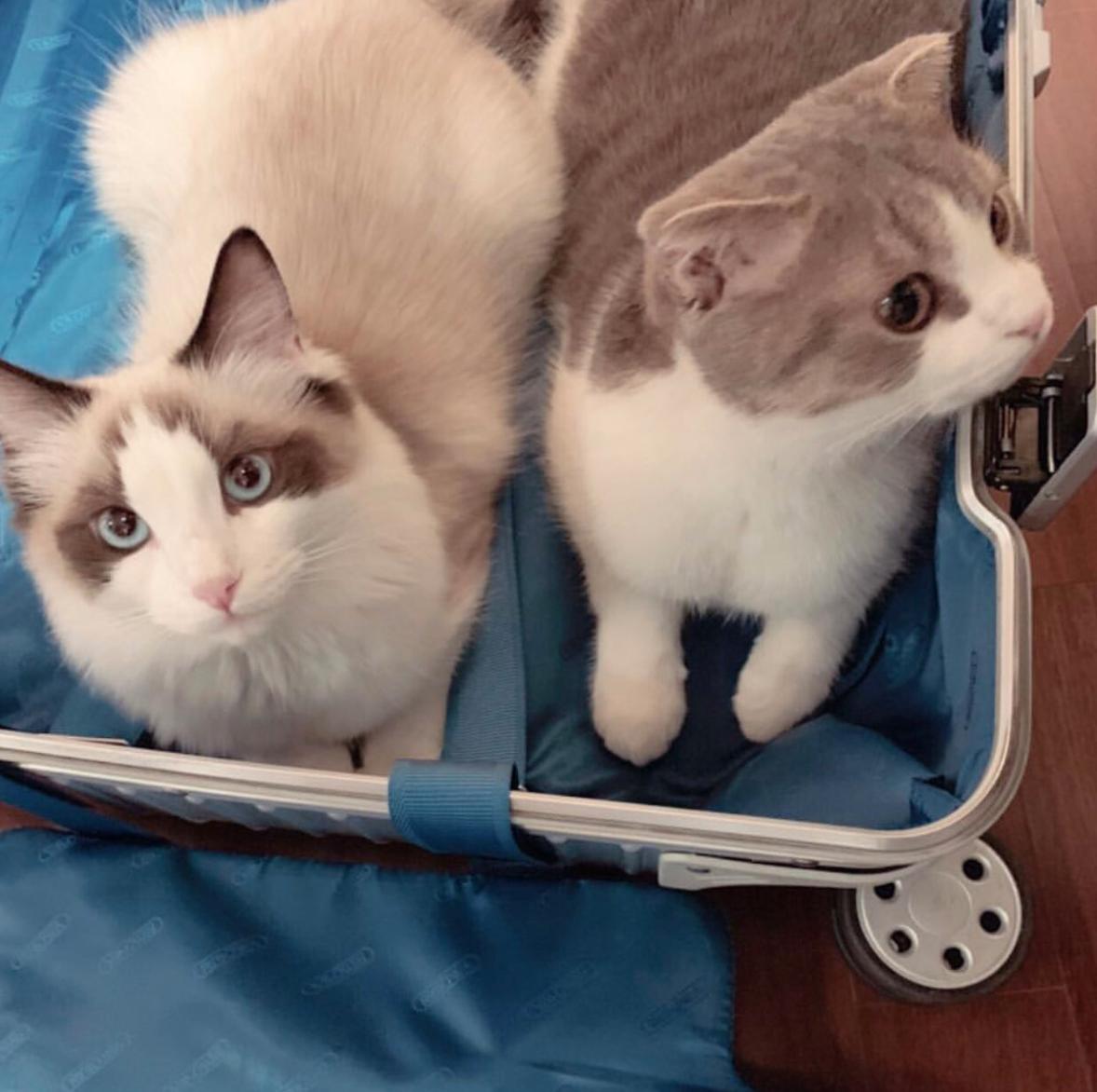 Taylor Swift và Lisa (Black Pink) đúng là 2 chị em: Ngoại hình giống nhau đã đành, đến 2 chú mèo cưng nhìn cũng như sinh đôi - Ảnh 6.