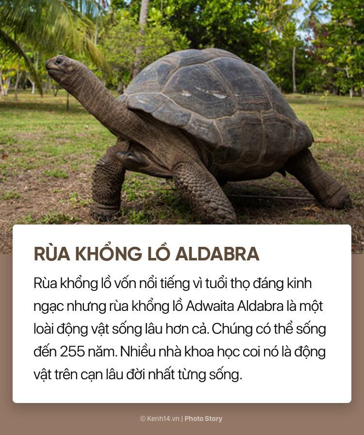 Bất ngờ trước tuổi thọ lâu đời của những loài động vật này - Ảnh 9.