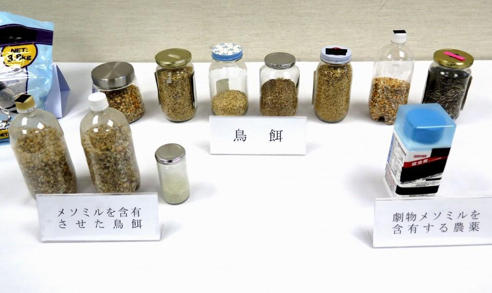 Nhật Bản: Cảnh sát bắt giữ, điều tra phó giáo sư đại học đầu độc hàng loạt chim bồ câu