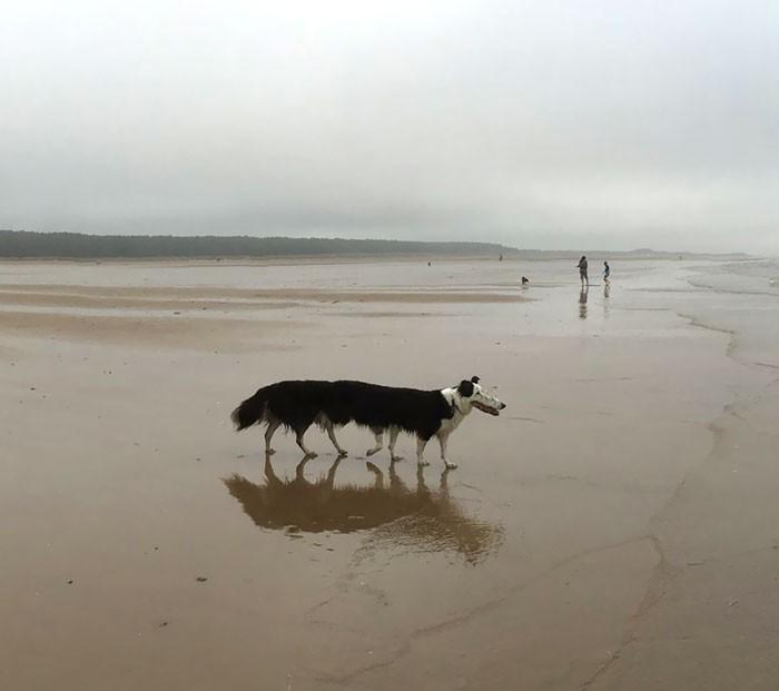 Panorama để chụp cảnh thì hay nhưng hễ chụp chó lại ra sâu róm nhiều chân - Ảnh 1.