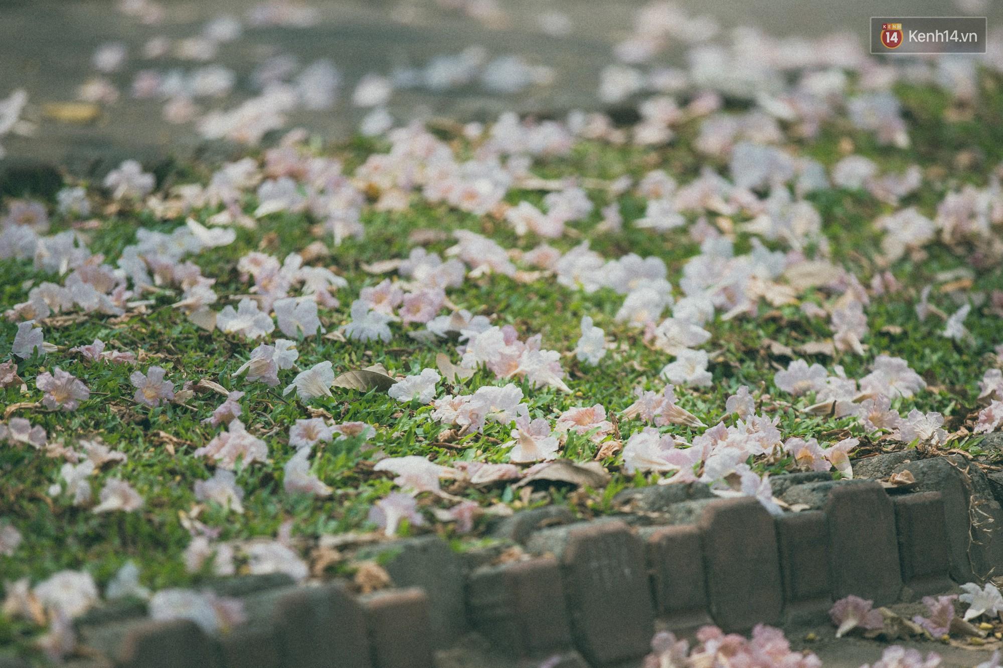 Sài Gòn mùa hoa kèn hồng: dịu dàng và dễ thương đến lạ! - Ảnh 9.