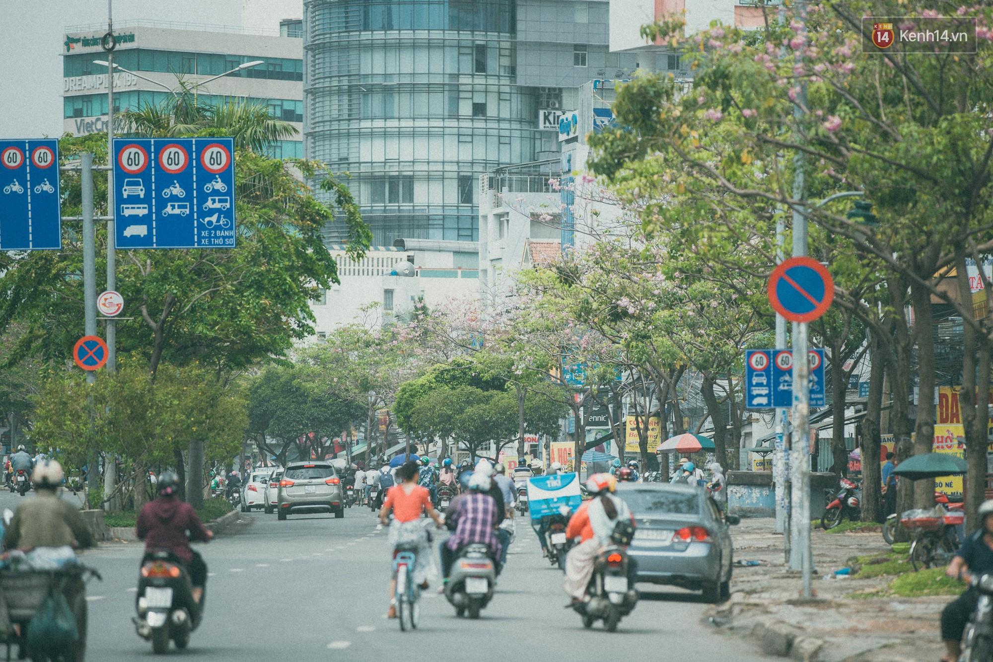 Sài Gòn mùa hoa kèn hồng: dịu dàng và dễ thương đến lạ! - Ảnh 13.
