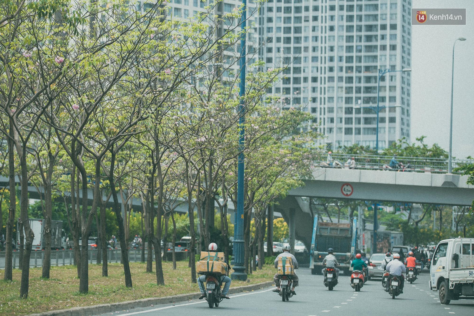 Sài Gòn mùa hoa kèn hồng: dịu dàng và dễ thương đến lạ! - Ảnh 6.