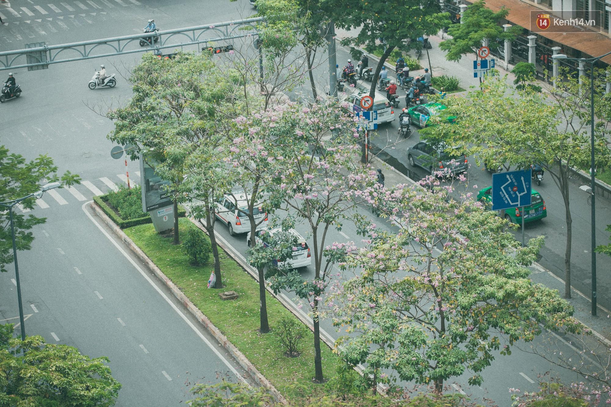 Sài Gòn mùa hoa kèn hồng: dịu dàng và dễ thương đến lạ! - Ảnh 2.
