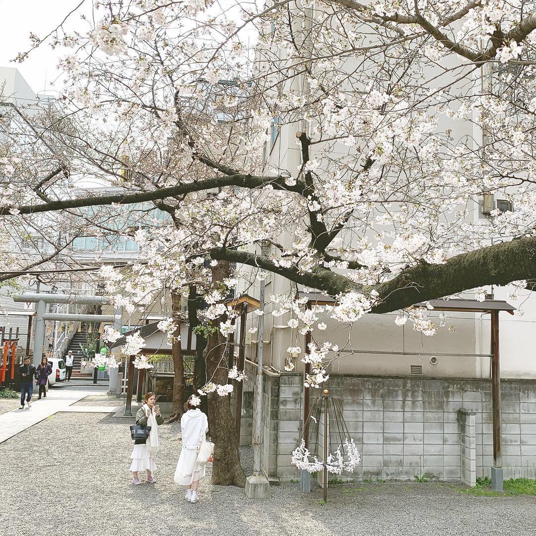 Không Nhật Bản thì Hàn Quốc, cảm giác như cả thế giới đều đi ngắm hoa anh đào hết rồi! - Ảnh 16.