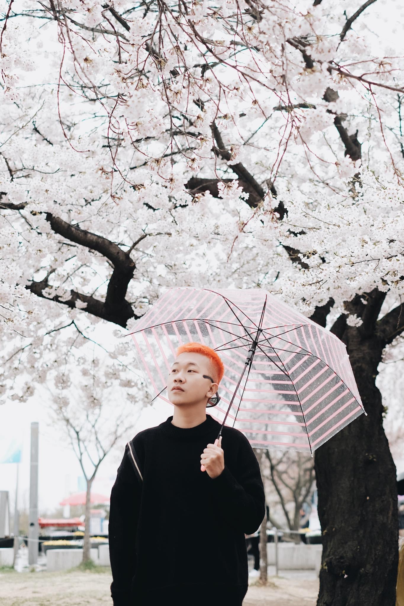 Không Nhật Bản thì Hàn Quốc, cảm giác như cả thế giới đều đi ngắm hoa anh đào hết rồi! - Ảnh 13.