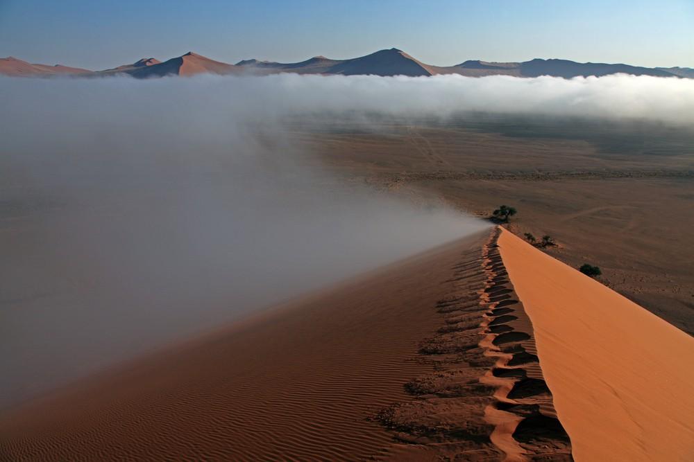 Chiến thuật sinh tồn tuyệt vời của loài bọ sống tại một trong những sa mạc khô nhất thế giới - Ảnh 2.