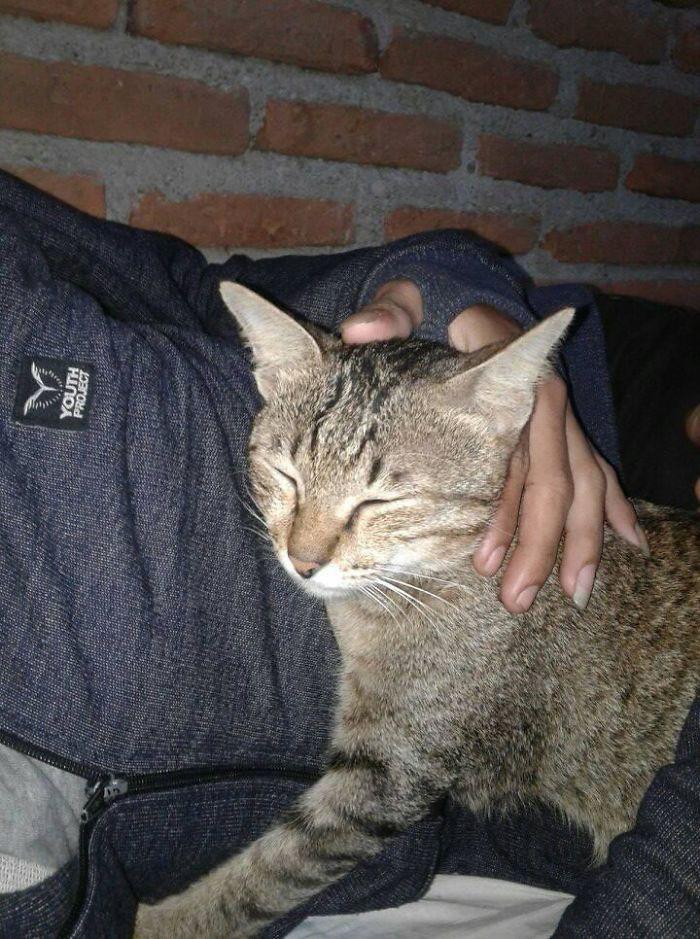 Cắn đứt tai nghe của sen, boss mèo đi bắt con rắn về đền để rồi trở thành ngôi sao MXH - Ảnh 5.
