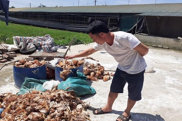 Truy tìm nhóm người nghi ném đá làm chết 1.200 con gà ở Hà Tĩnh - Ảnh 1.