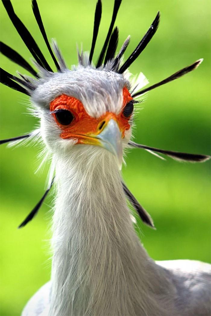Đây là loài chim có hàng mi khiến chị em ghen tỵ - Ảnh 4.